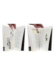 Monographie prématurée - Pages intérieures - (c) Stripologie.com